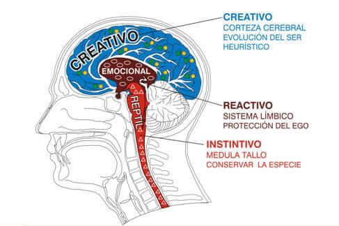 IMG I La venta emocional y el Cerebro reptiliano