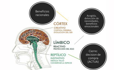 IMG2 La venta emocional y el Cerebro reptiliano